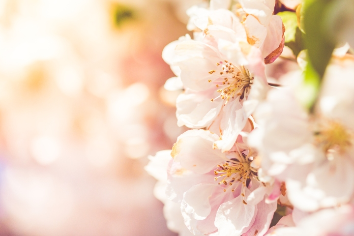 wonderful-spring-blooms-picjumbo-com